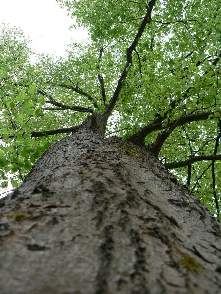 edward norton rachel evan wood